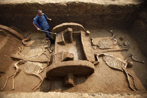 Ancient Chariot Fleet, Horses Unearthed in China